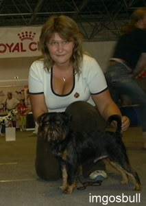 Belge griffon Charka Black Royal of Fire